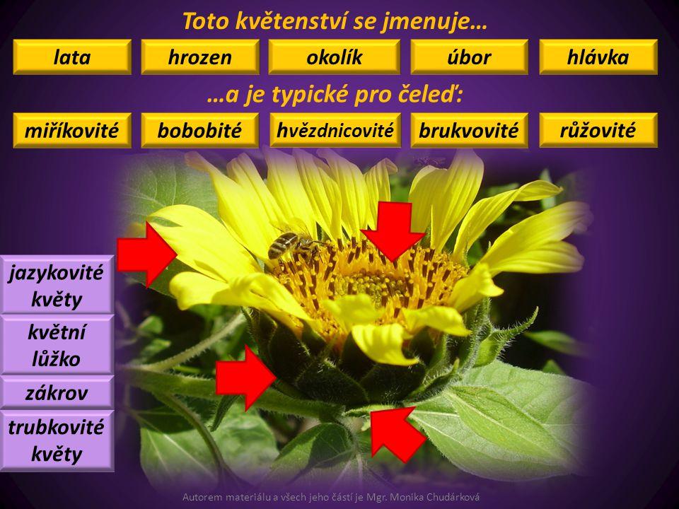 Autorem materiálu a všech jeho částí je Mgr. Monika Chudárková trubkovité květy jazykovité květy květní lůžko zákrov Toto květenství se jmenuje… latah