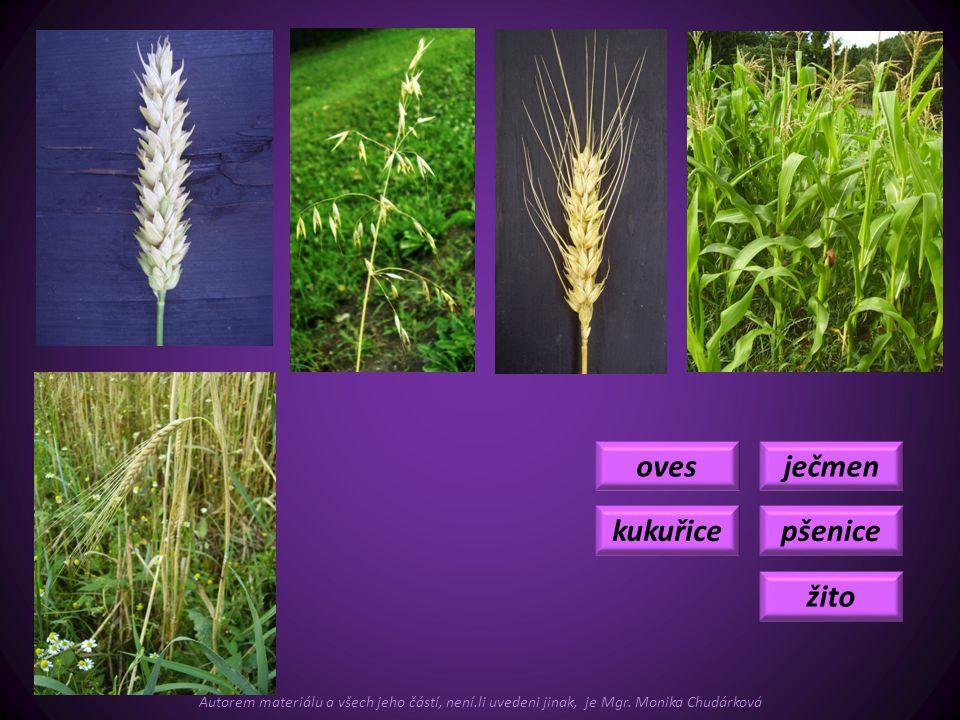 ječmen pšenice žito oves kukuřice Autorem materiálu a všech jeho částí, není.li uvedeni jinak, je Mgr. Monika Chudárková