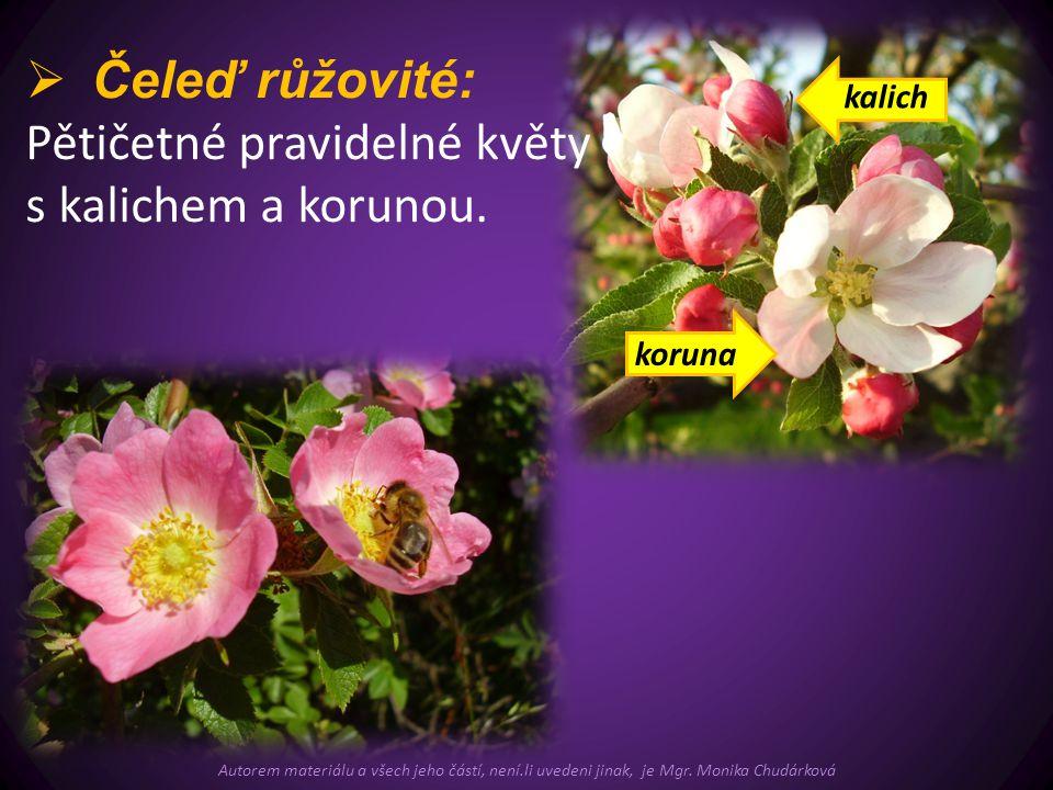  Čeleď růžovité: Pětičetné pravidelné květy s kalichem a korunou. koruna kalich Autorem materiálu a všech jeho částí, není.li uvedeni jinak, je Mgr.
