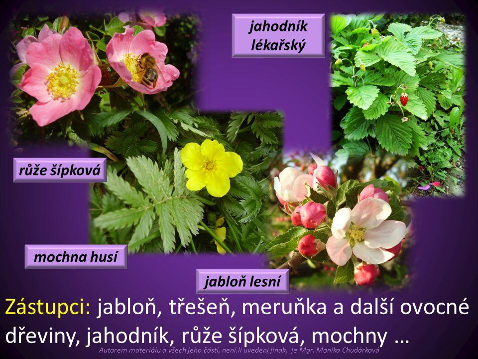 Zástupci: jabloň, třešeň, meruňka a další ovocné dřeviny, jahodník, růže šípková, mochny … jahodník lékařský růže šípková mochna husí jabloň lesní Aut