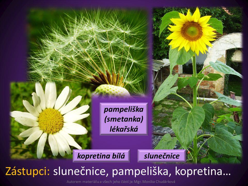 Autorem materiálu a všech jeho částí je Mgr. Monika Chudárková Zástupci: slunečnice, pampeliška, kopretina… slunečnicekopretina bílá pampeliška (smeta