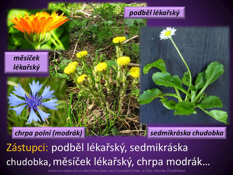  Čeleď brukvovité: (křížaté), květy čtyřčetné.