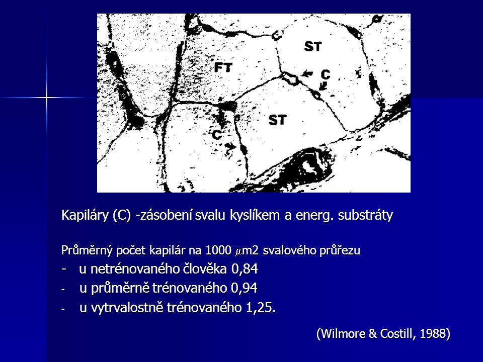 Kapiláry (C) -zásobení svalu kyslíkem a energ. substráty Průměrný počet kapilár na 1000  m2 svalového průřezu - u netrénovaného člověka 0,84 - u prům