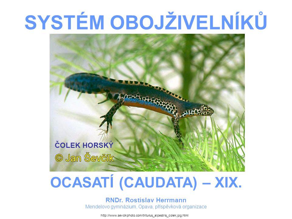 SYSTÉM OBOJŽIVELNÍKŮ – OCASATÍ (CAUDATA) – XIX.ČOLEK OBECNÝ –Náš nejrozšířenější čolek.