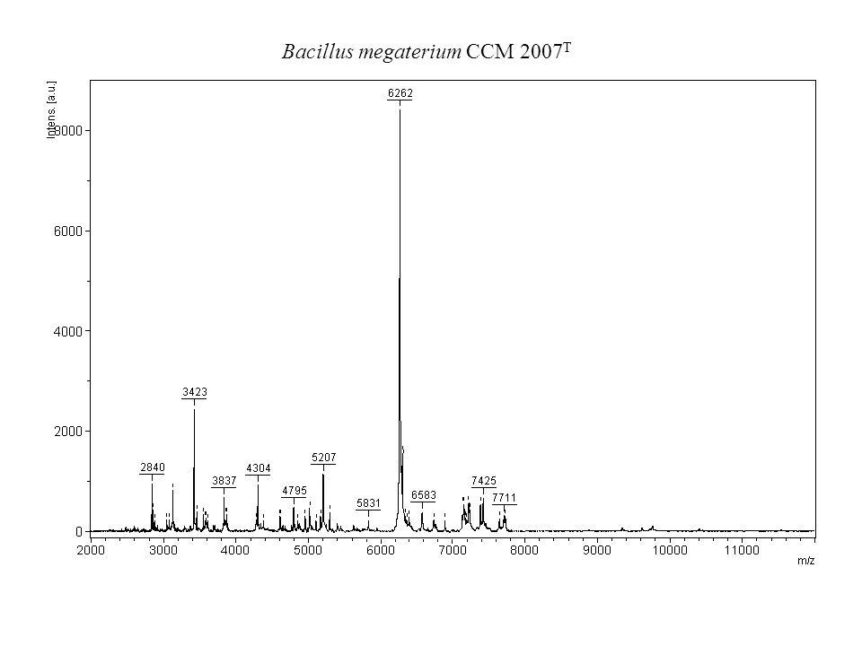 Bacillus megaterium CCM 2007 T