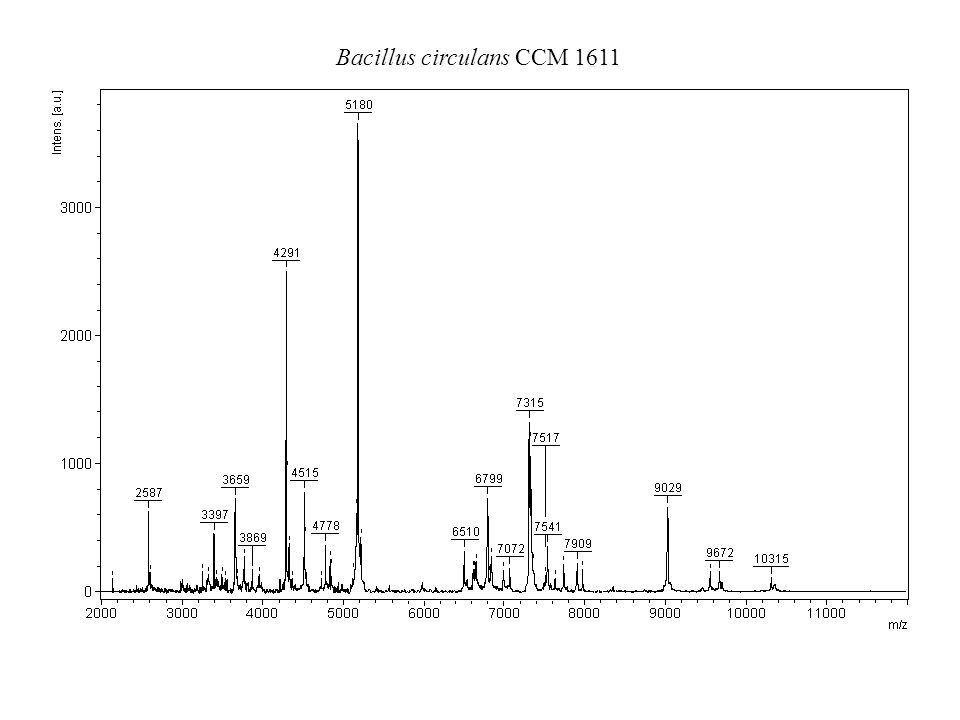 Bacillus circulans CCM 1611