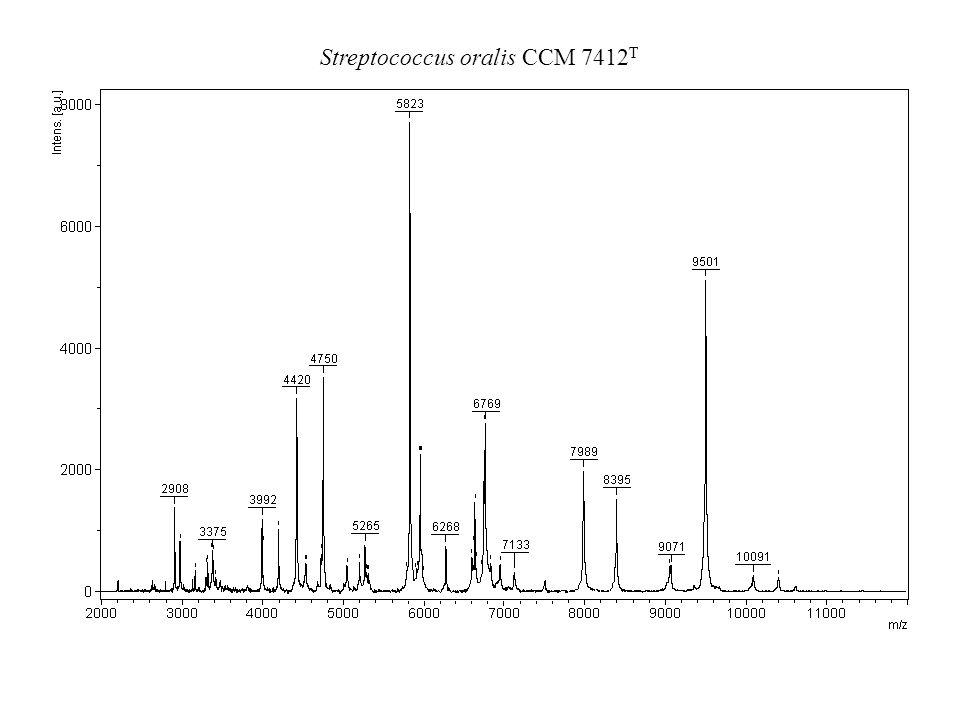 Streptococcus oralis CCM 7412 T