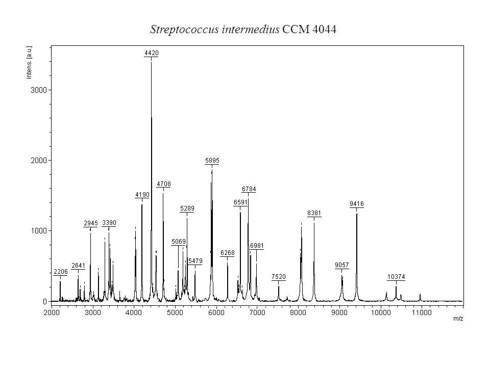 Streptococcus intermedius CCM 7444 T