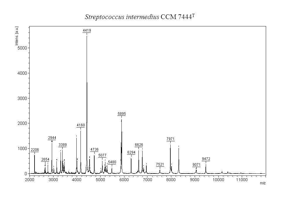 Proteus mirabilis CCM 1944