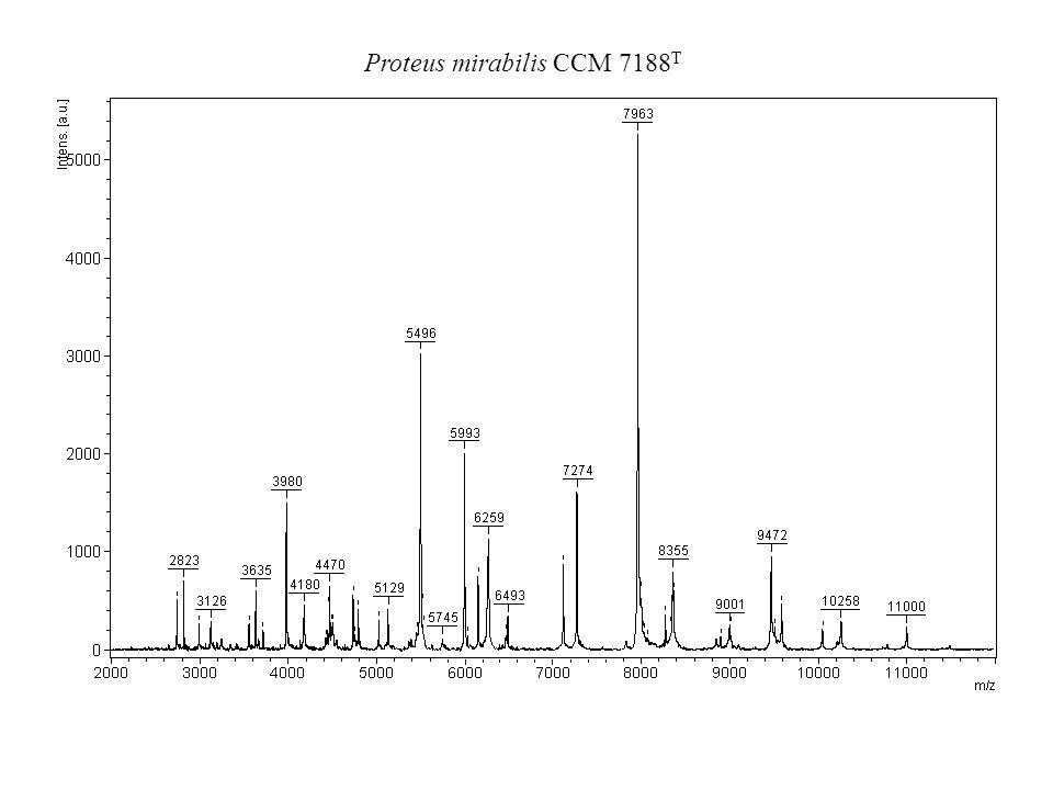 Proteus mirabilis CCM 7188 T