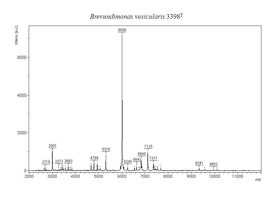 Brevundimonas vesicularis 3398 T