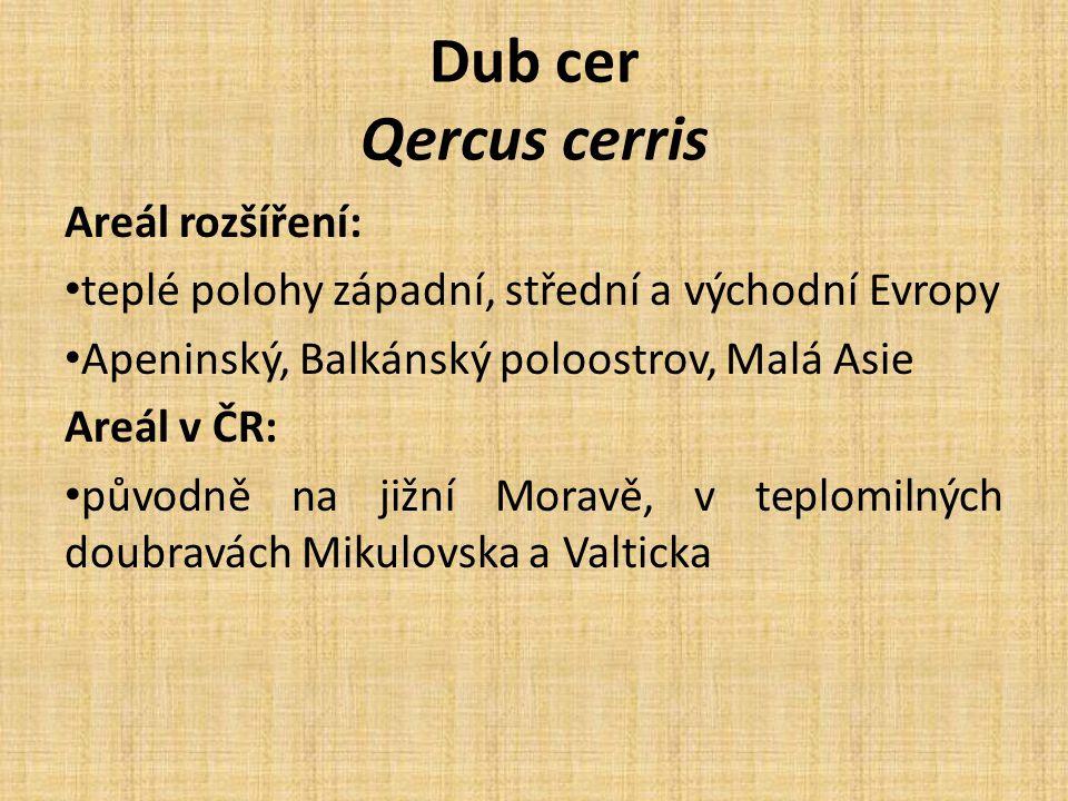 Dub cer Qercus cerris Areál rozšíření: teplé polohy západní, střední a východní Evropy Apeninský, Balkánský poloostrov, Malá Asie Areál v ČR: původně na jižní Moravě, v teplomilných doubravách Mikulovska a Valticka