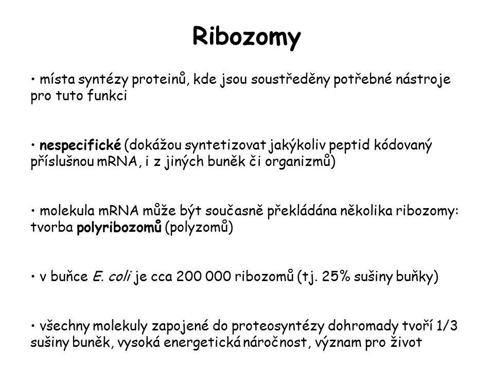Ribozomy místa syntézy proteinů, kde jsou soustředěny potřebné nástroje pro tuto funkci nespecifické (dokážou syntetizovat jakýkoliv peptid kódovaný p