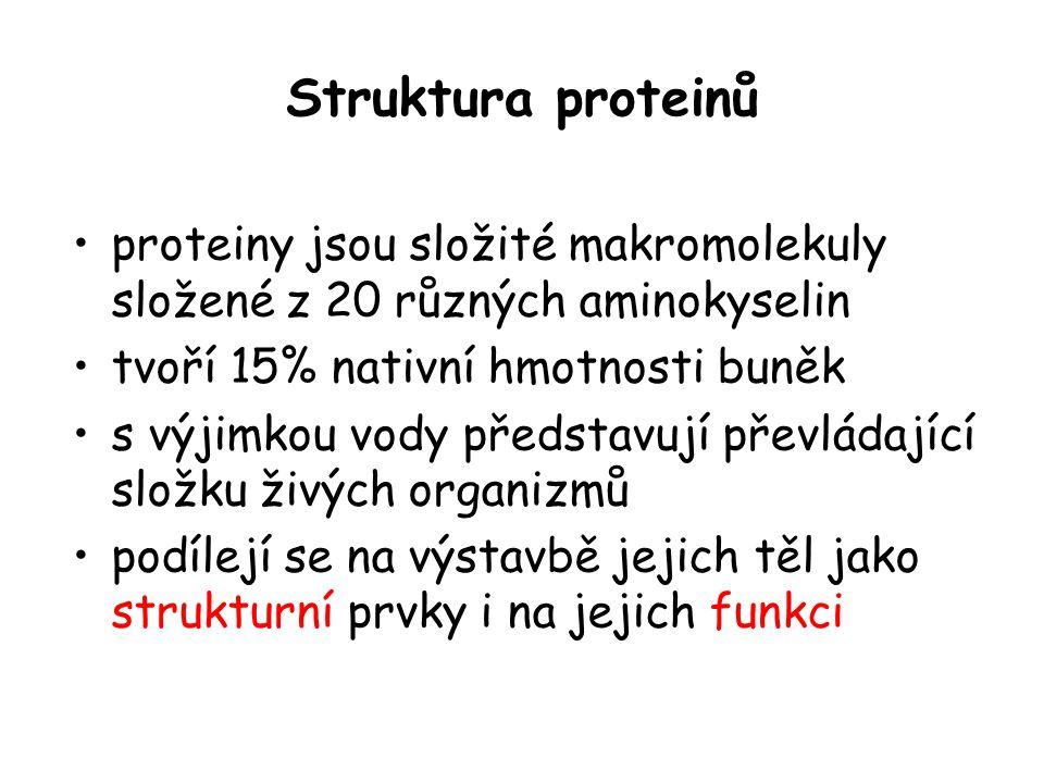 Struktura proteinů proteiny jsou složité makromolekuly složené z 20 různých aminokyselin tvoří 15% nativní hmotnosti buněk s výjimkou vody představují