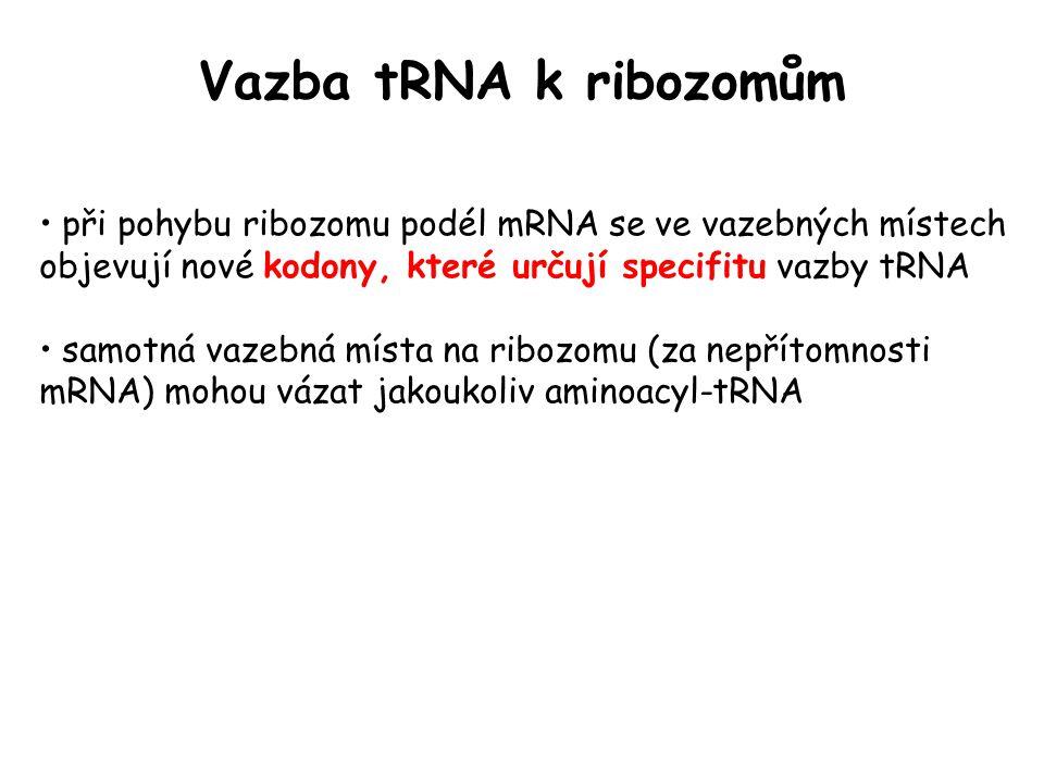 Vazba tRNA k ribozomům při pohybu ribozomu podél mRNA se ve vazebných místech objevují nové kodony, které určují specifitu vazby tRNA samotná vazebná