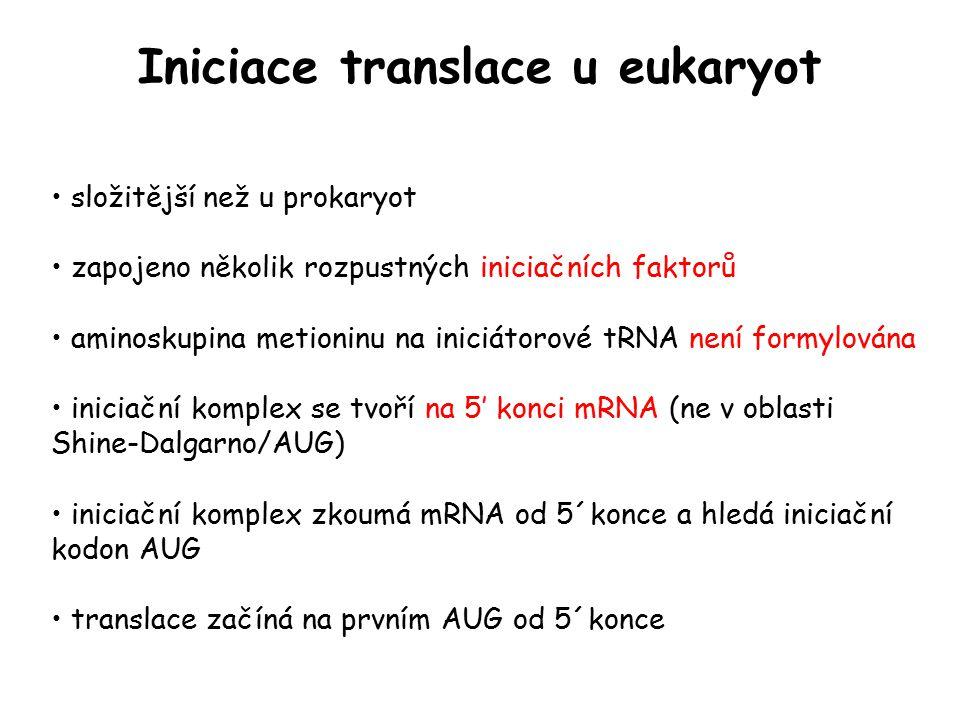 Iniciace translace u eukaryot složitější než u prokaryot zapojeno několik rozpustných iniciačních faktorů aminoskupina metioninu na iniciátorové tRNA
