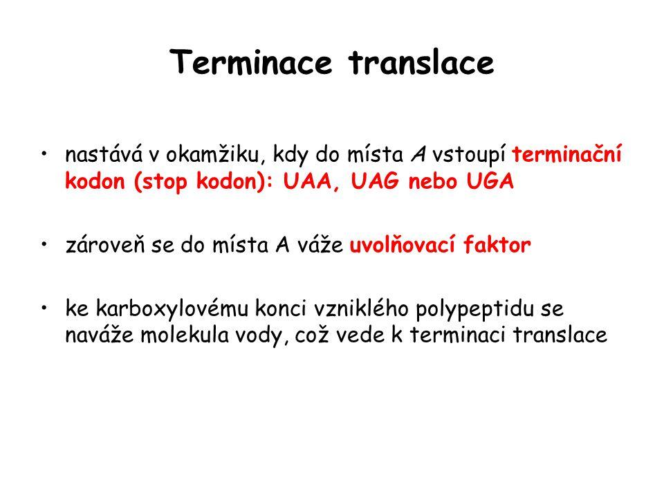 Terminace translace nastává v okamžiku, kdy do místa A vstoupí terminační kodon (stop kodon): UAA, UAG nebo UGA zároveň se do místa A váže uvolňovací