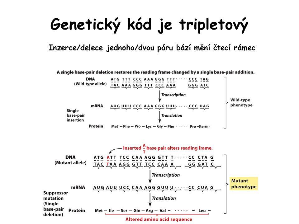 Genetický kód je tripletový Inzerce/delece jednoho/dvou páru bází mění čtecí rámec