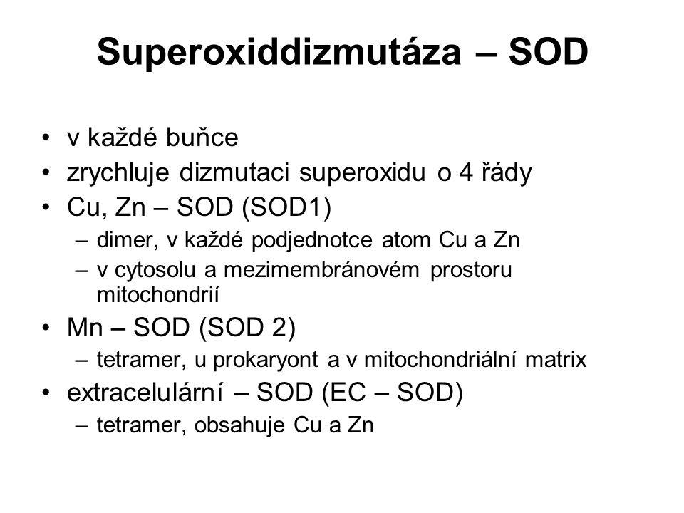 Superoxiddizmutáza – SOD v každé buňce zrychluje dizmutaci superoxidu o 4 řády Cu, Zn – SOD (SOD1) –dimer, v každé podjednotce atom Cu a Zn –v cytosol