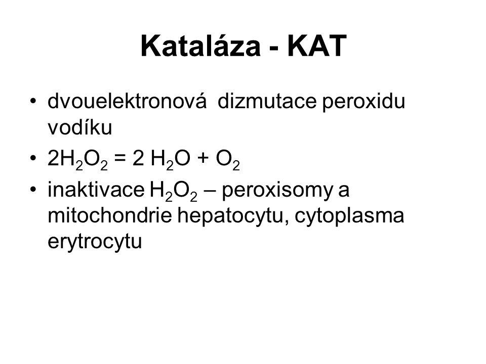 Kataláza - KAT dvouelektronová dizmutace peroxidu vodíku 2H 2 O 2 = 2 H 2 O + O 2 inaktivace H 2 O 2 – peroxisomy a mitochondrie hepatocytu, cytoplasm