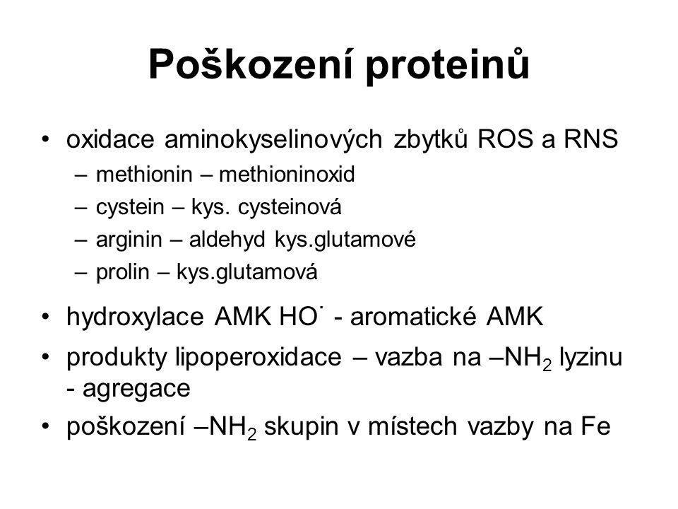 Poškození proteinů oxidace aminokyselinových zbytků ROS a RNS –methionin – methioninoxid –cystein – kys. cysteinová –arginin – aldehyd kys.glutamové –