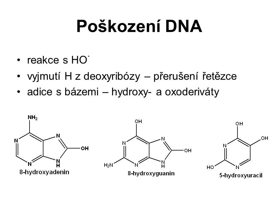 Poškození DNA reakce s HO · vyjmutí H z deoxyribózy – přerušení řetězce adice s bázemi – hydroxy- a oxoderiváty
