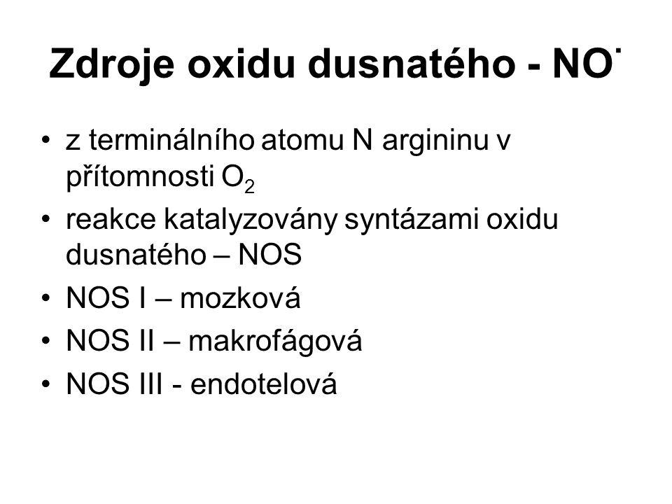 Zdroje oxidu dusnatého - NO · z terminálního atomu N argininu v přítomnosti O 2 reakce katalyzovány syntázami oxidu dusnatého – NOS NOS I – mozková NO