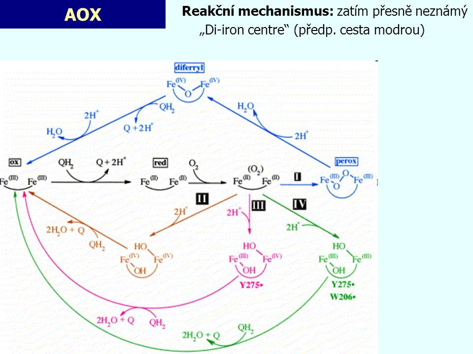 """AOX Reakční mechanismus: zatím přesně neznámý """"Di-iron centre"""" (předp. cesta modrou)"""