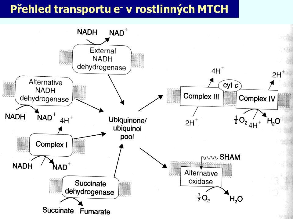 Přehled transportu e - v rostlinných MTCH