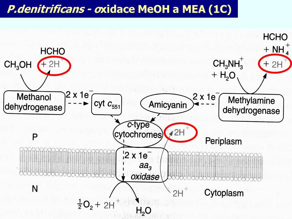 P.denitrificans - oxidace MeOH a MEA (1C)