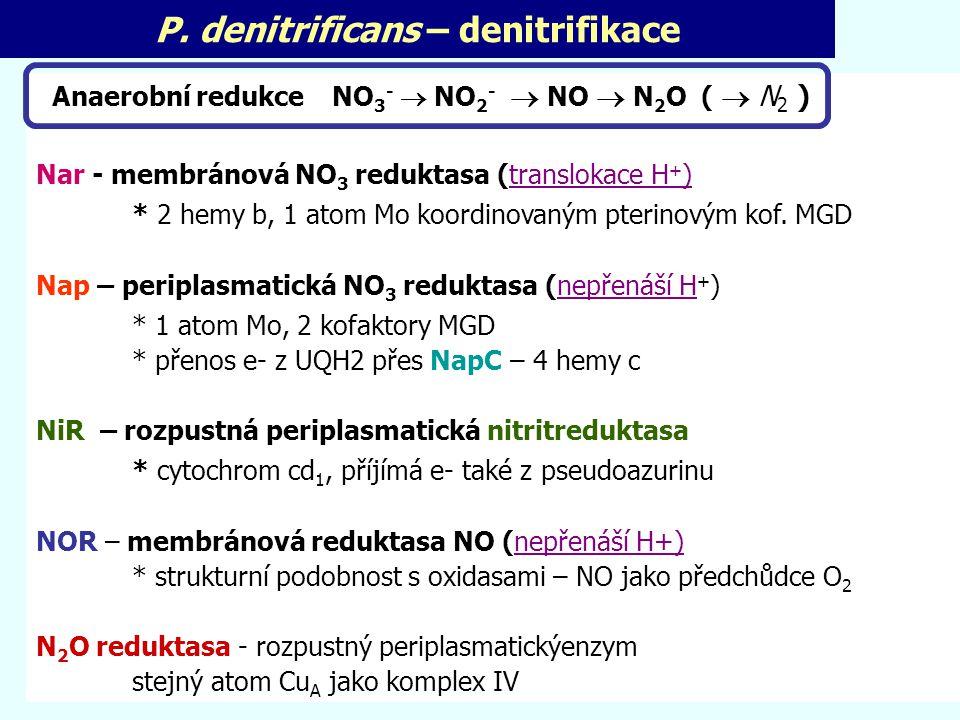 P. denitrificans – denitrifikace Anaerobní redukce NO 3 -  NO 2 -  NO  N 2 O (  N 2 ) Nar - membránová NO 3 reduktasa (translokace H + ) * 2 hemy