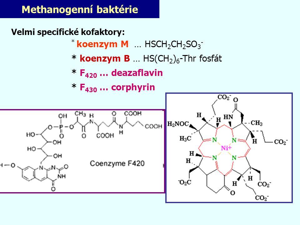 Methanogenní baktérie Velmi specifické kofaktory: * koenzym M … HSCH 2 CH 2 SO 3 - * koenzym B … HS(CH 2 ) 6 -Thr fosfát * F 420 … deazaflavin * F 430