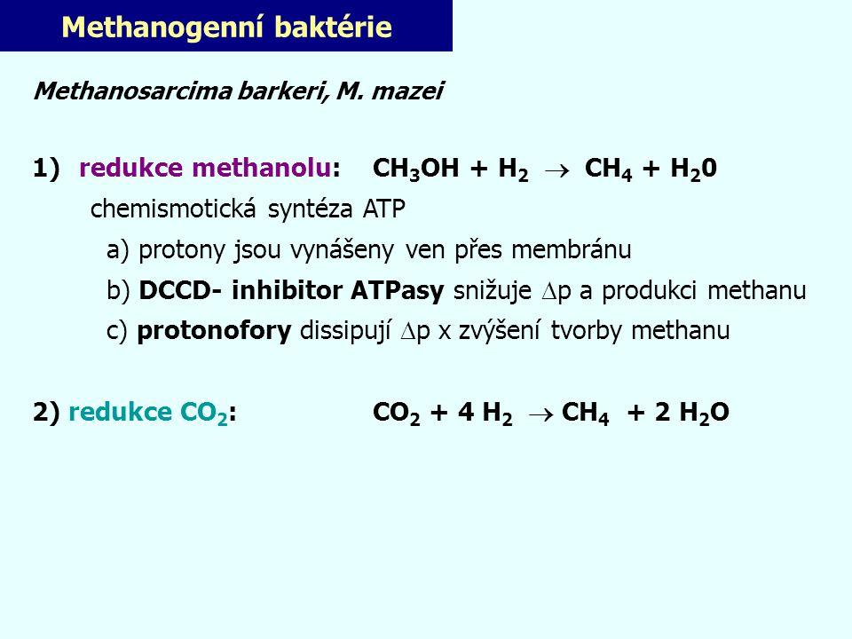 Methanogenní baktérie Methanosarcima barkeri, M. mazei 1) redukce methanolu: CH 3 OH + H 2  CH 4 + H 2 0 chemismotická syntéza ATP a) protony jsou vy