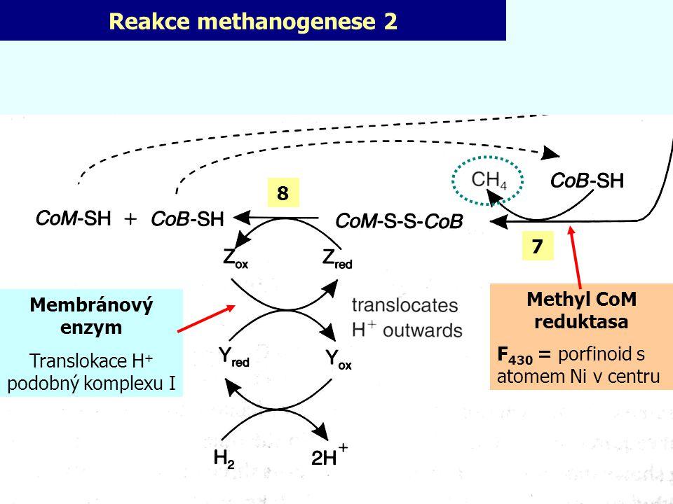 Reakce methanogenese 2 Methyl CoM reduktasa F 430 = porfinoid s atomem Ni v centru Membránový enzym Translokace H + podobný komplexu I 8 7