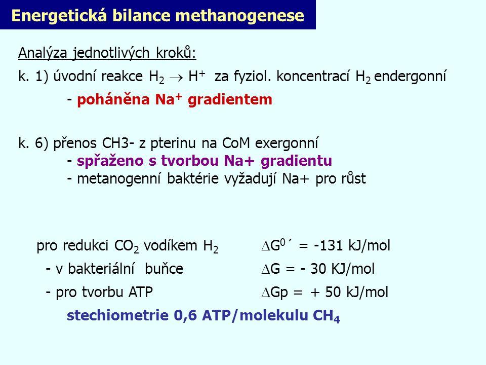 Energetická bilance methanogenese Analýza jednotlivých kroků: k. 1) úvodní reakce H 2  H + za fyziol. koncentrací H 2 endergonní - poháněna Na + grad