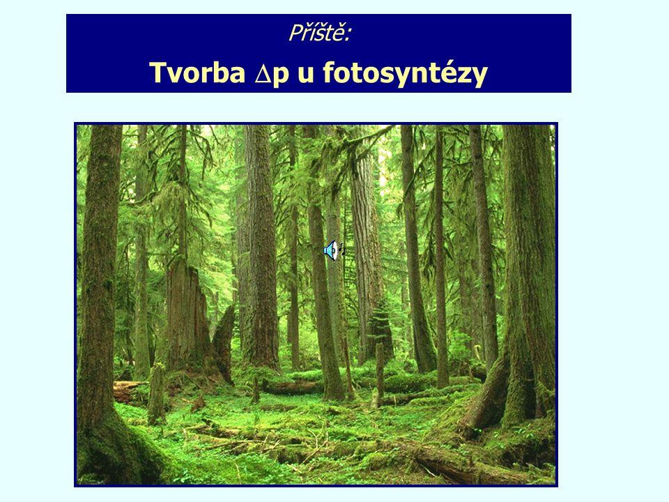 Příště: Tvorba  p u fotosyntézy