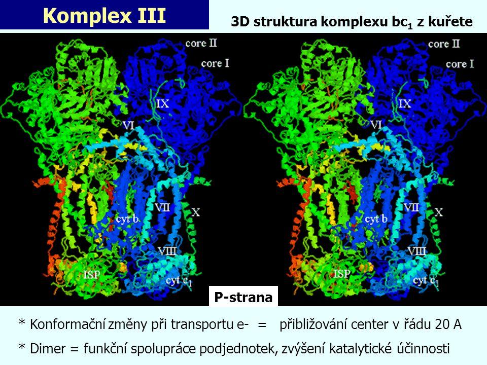 Komplex III * Konformační změny při transportu e- = přibližování center v řádu 20 A * Dimer = funkční spolupráce podjednotek, zvýšení katalytické účin