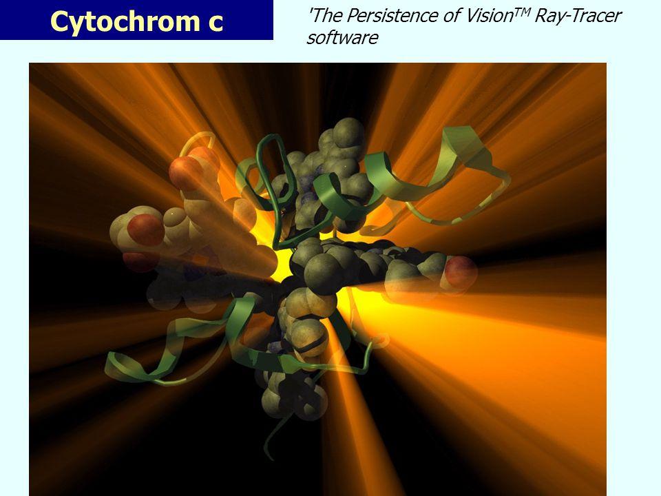 Cytochrom c * Periferální protein: vazba na P-straně membrány * Rozpustný x většina cytochromů * Asymetricky uložený hem – hrana cca 5A od povrchu proteinu - skupina lysinů pro interakci s cyt c 1 a cyt c oxidasou Cytochrom c (horse) - Cyt c je vysoce konzervován u všech druhů organismů člověk,šimpanz x makak 1AA člověk x kuře 13 AA - malá molekula cca 12kDa - výhodné pro studia evoluční divergence (fylogeneze)