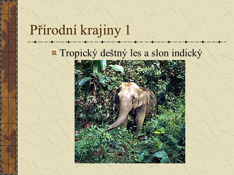 Přírodní krajiny 1 Tropický deštný les a slon indický