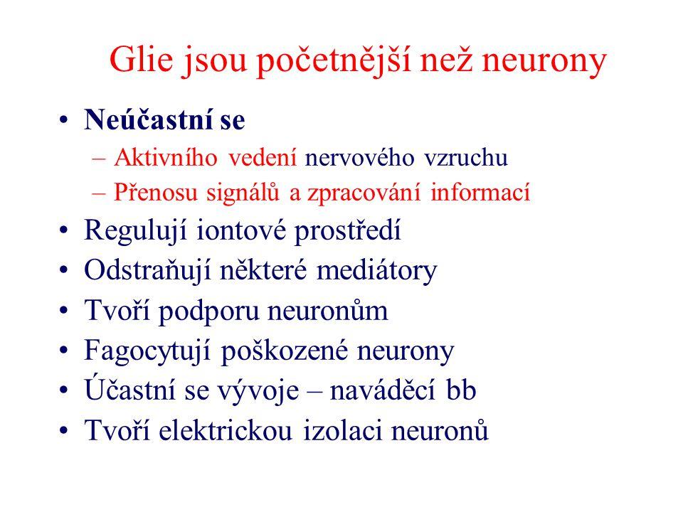Glie jsou početnější než neurony Neúčastní se –Aktivního vedení nervového vzruchu –Přenosu signálů a zpracování informací Regulují iontové prostředí Odstraňují některé mediátory Tvoří podporu neuronům Fagocytují poškozené neurony Účastní se vývoje – naváděcí bb Tvoří elektrickou izolaci neuronů