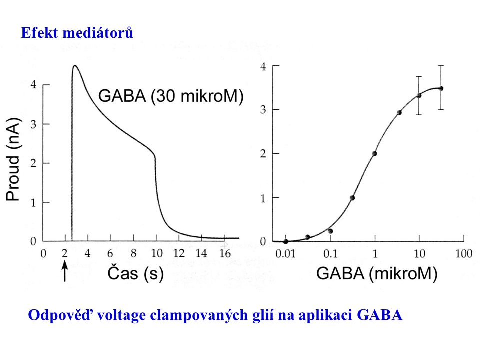Efekt mediátorů Odpověď voltage clampovaných glií na aplikaci GABA