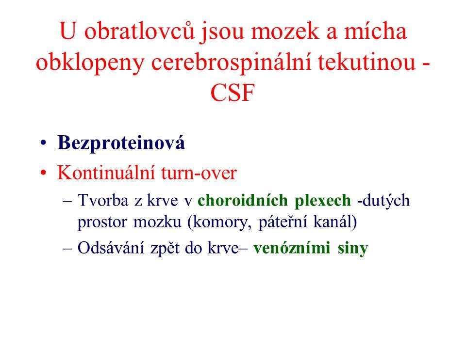 U obratlovců jsou mozek a mícha obklopeny cerebrospinální tekutinou - CSF Bezproteinová Kontinuální turn-over –Tvorba z krve v choroidních plexech -dutých prostor mozku (komory, páteřní kanál) –Odsávání zpět do krve– venózními siny