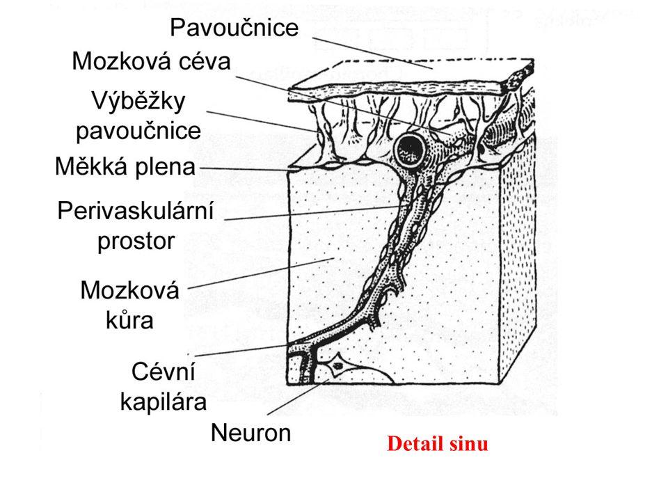 Detail sinu