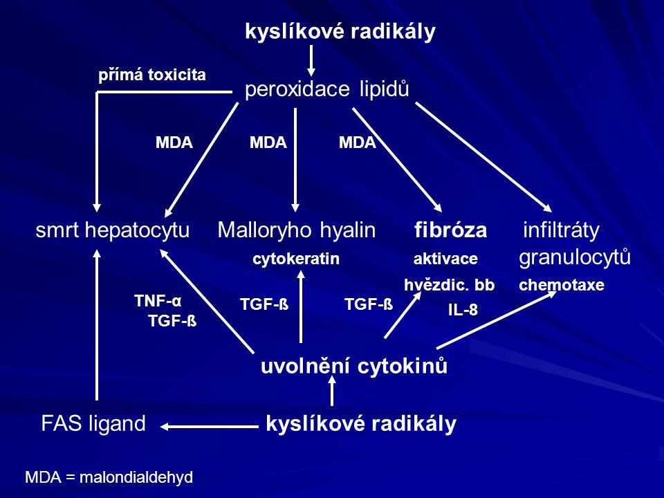 kyslíkové radikály peroxidace lipidů smrt hepatocytu Malloryho hyalin fibróza infiltráty cytokeratin aktivace granulocytů hvězdic. bb chemotaxe uvolně