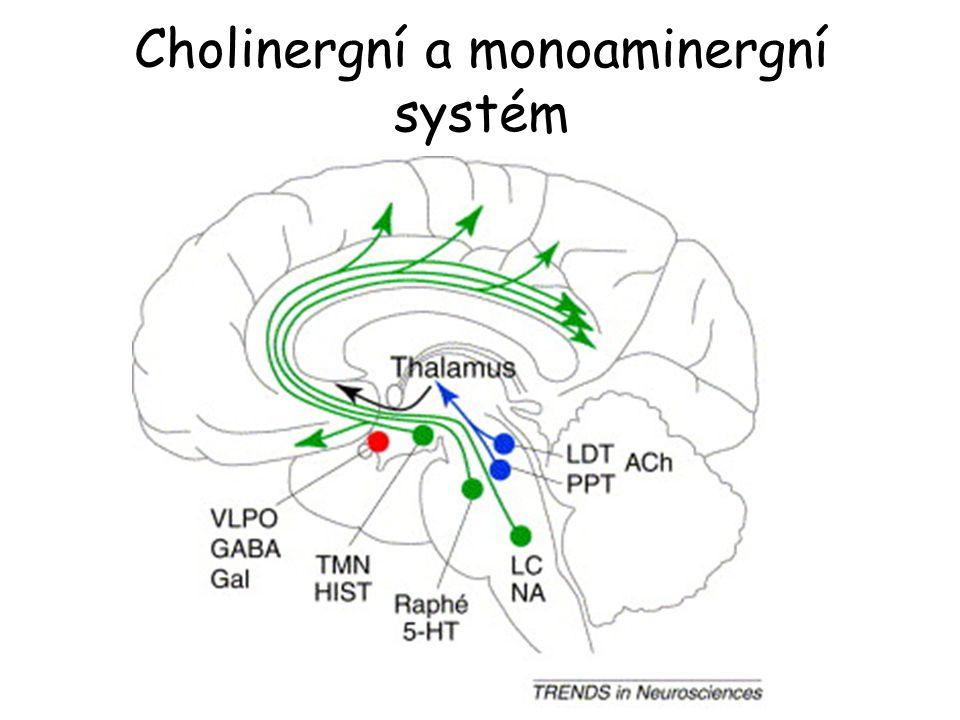 Cholinergní a monoaminergní systém
