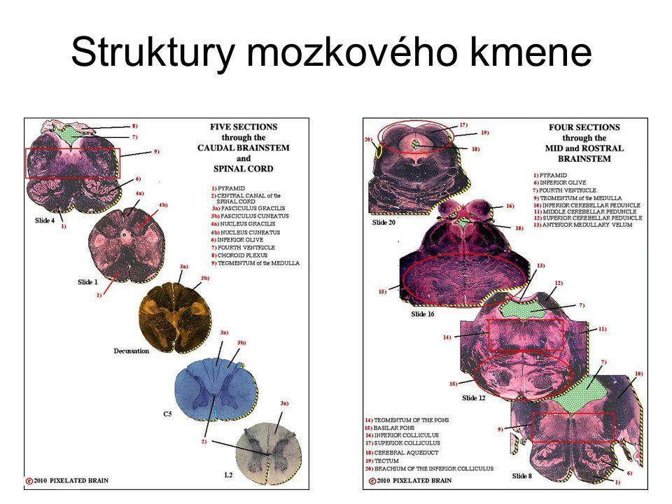 Retikulární formace