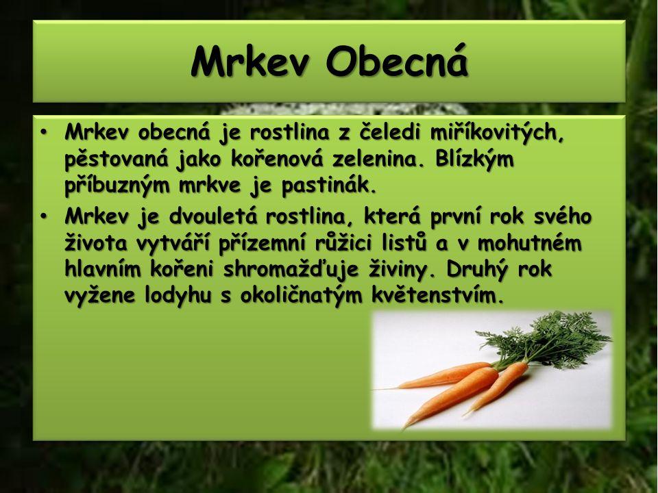 Mrkev Obecná Mrkev obecná je rostlina z čeledi miříkovitých, pěstovaná jako kořenová zelenina.