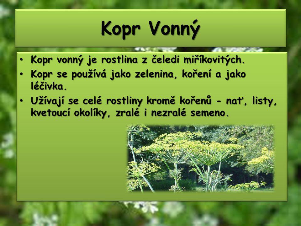 Kopr Vonný Kopr vonný je rostlina z čeledi miříkovitých.