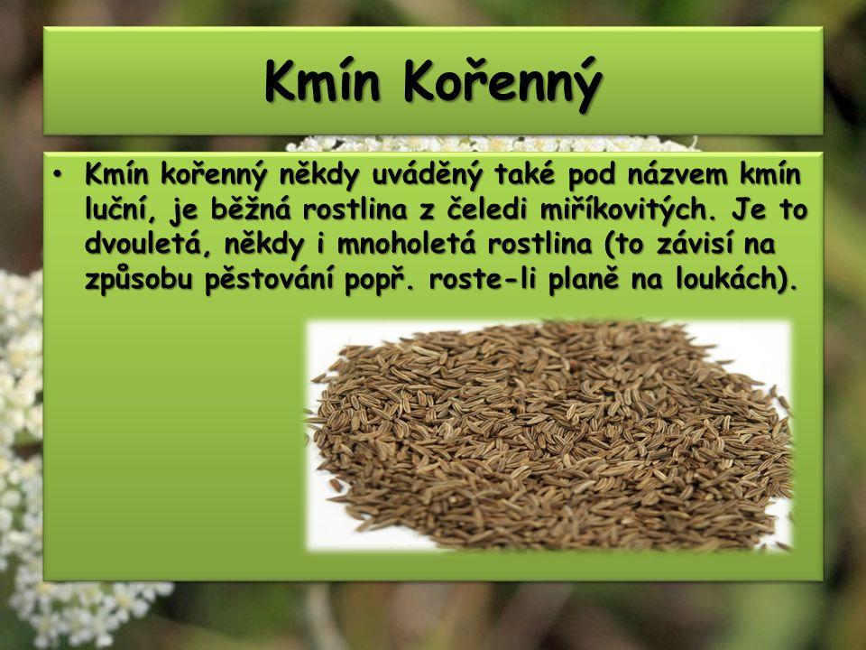 Kmín Kořenný Kmín kořenný někdy uváděný také pod názvem kmín luční, je běžná rostlina z čeledi miříkovitých.