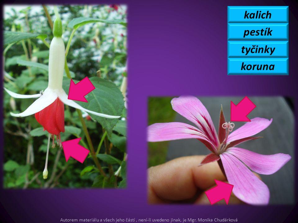 kalich pestík tyčinky koruna Autorem materiálu a všech jeho částí, není-li uvedeno jinak, je Mgr. Monika Chudárková